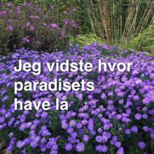 Jeg vidste hvor paradisets have lå
